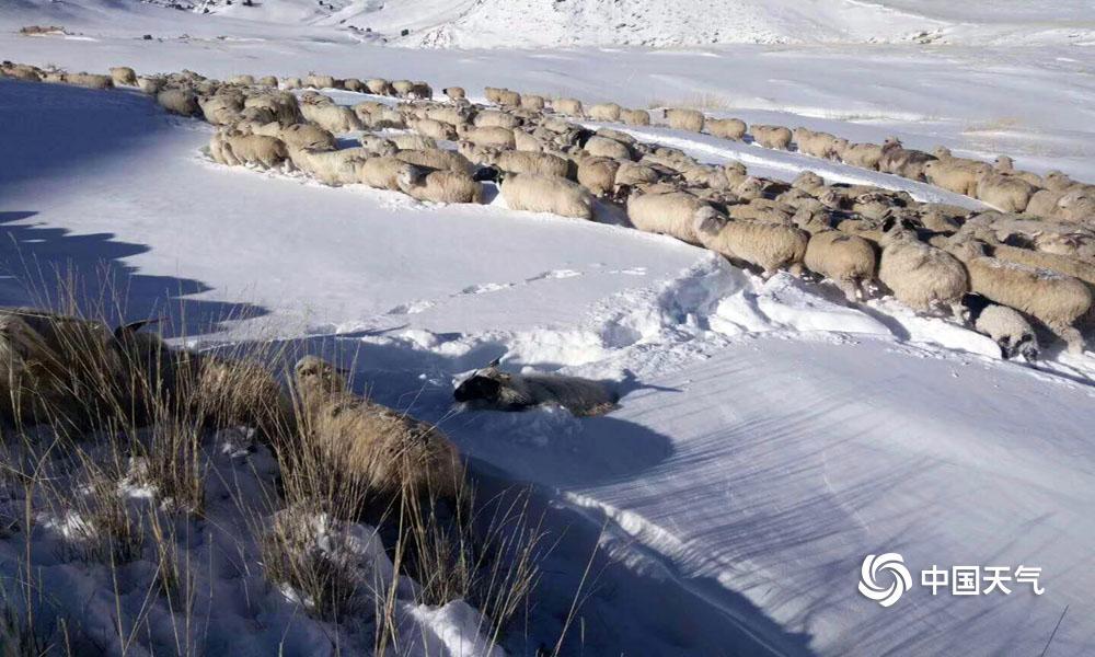 自去年12月底开始,青海省海西东部出现了不同程度的降雪天气,在近二十