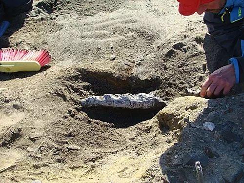 科学家在南极地区发掘化石。(新华社/美洲通讯社)
