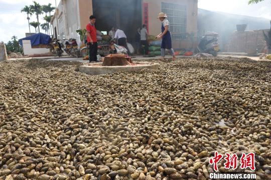 资料图:槟榔。 图片来源:中新网