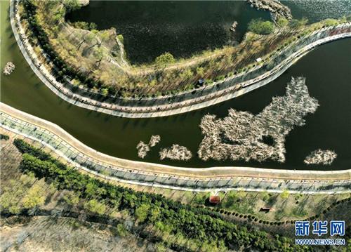 位于河南省平顶山市由采煤塌陷区修复改造的白鹭洲国家城市湿地公园一景(3月12日无人机拍摄)。