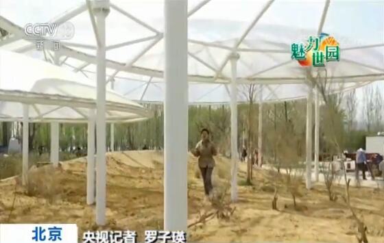 """央视记者 罗子瑛:百草园的整体布局以中国""""阴阳五行""""观念为灵感来源。园区还按照我国西高东低的地理环境特点整体布局,展示不同产区的道地中草药。这片撑着三把透光薄膜伞的展区,展示的是沙漠里的中药材,不仅营造了沙漠植物需要的光照充足雨量小的环境,而且把药材的寄生植物也搬到了这里。"""