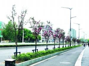 乌桕紫薇扮出不一样的龙蟠中路