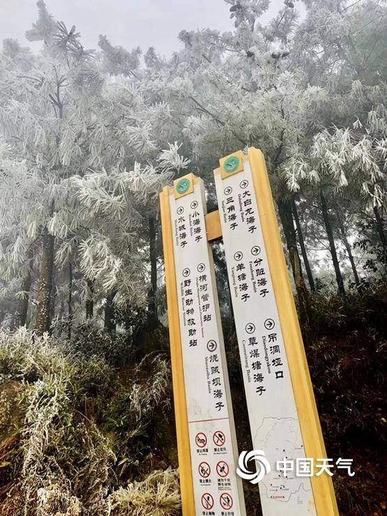 """冷空气""""速冻"""" 云南现雾凇美景"""