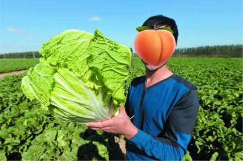 但不止于大。寿光把种菜这个农活,硬核地玩出了高科技和国际范,这边的蔬菜大片面都是用智能物联网限制温室生产的。