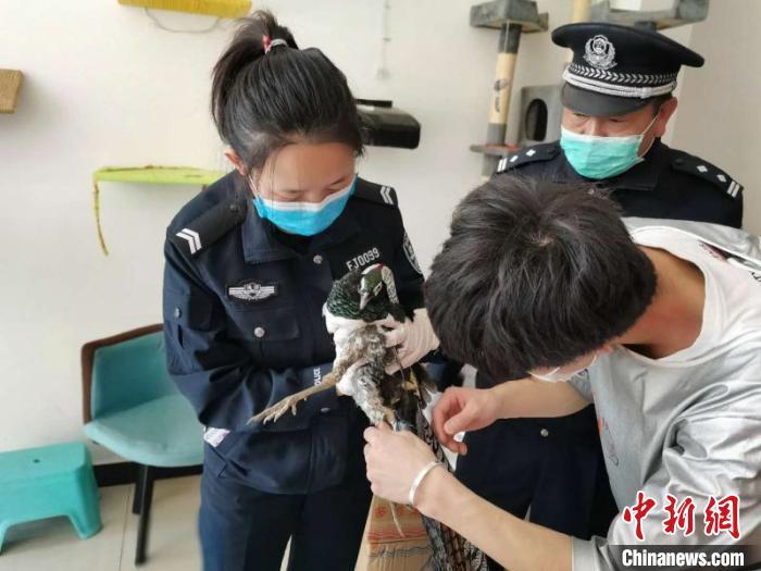 疫情防控期间 云南侦办野生动物案件2909起