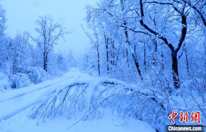 边城饶河50年来首次五月降雨夹雪 雪后现雾凇美景