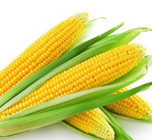 玉米成交量下跌,静待28号拍卖结果