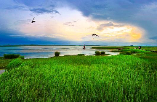 南大港湿地