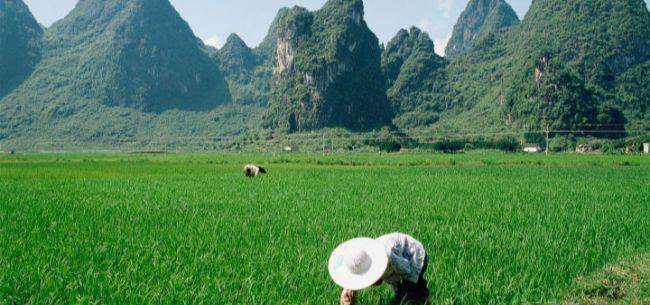 对话卢锋:农业革命如何改变世界