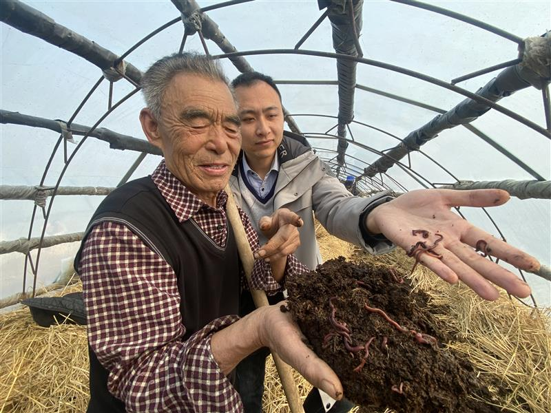 天津宁河:小蚯蚓从土里掘出新财富