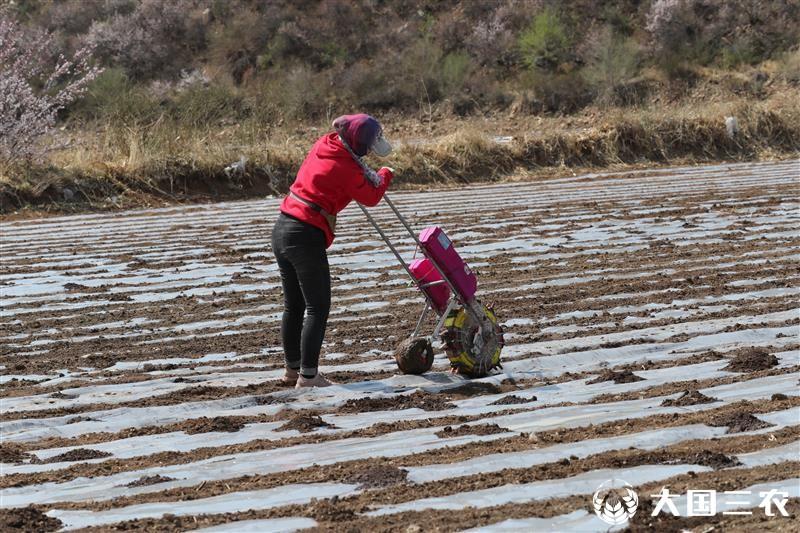 农耕革命奠定大粮食丰产