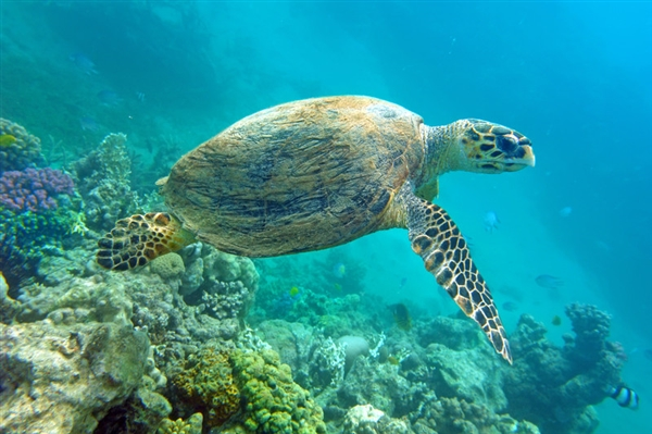 海龟一口气产下196枚龟蛋:刷新国内纪录