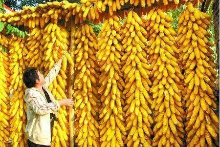 保护农民种粮积极性,必须坚决遏制农资价格上涨