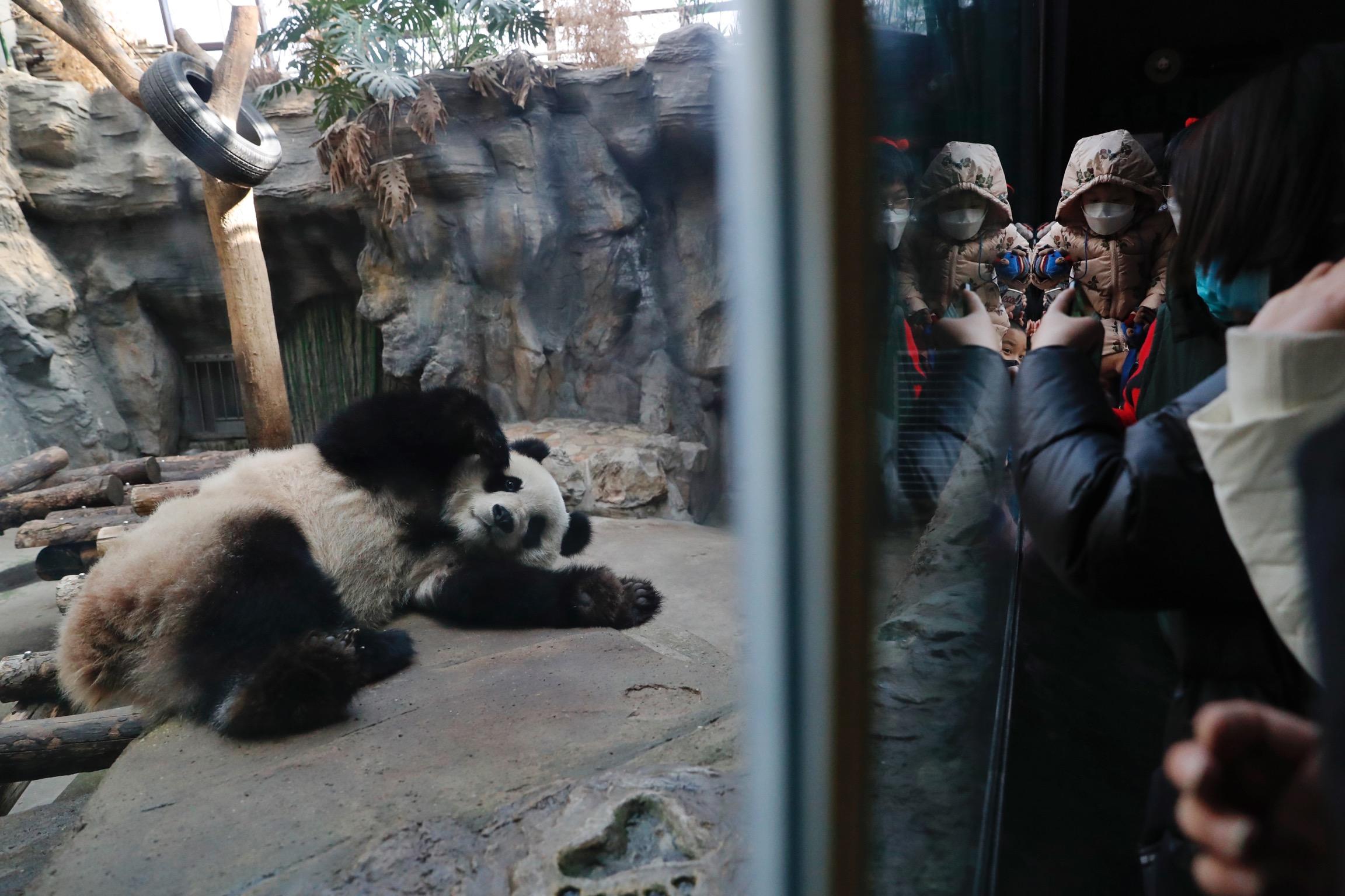 """大熊猫由""""濒危""""降为""""易危"""",还有哪些物种值得关注?"""