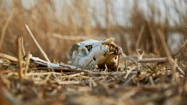 自然界的动物尸体都去哪了?腐生生物群让生态系统回收利用