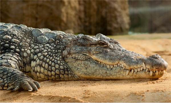 鳄鱼跃出水面吃掉无人机:电池被咬穿 嘴里喷出浓烟