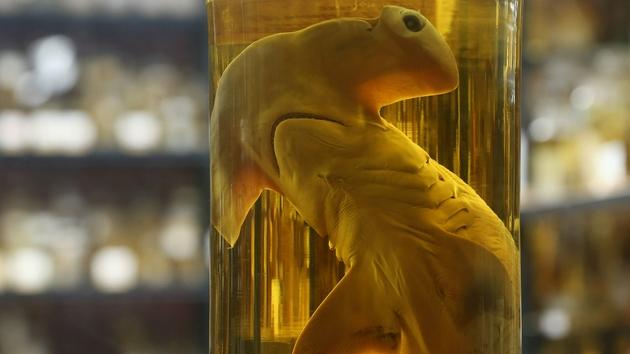 为什么酒精能够长期保存动物标?因为它是不错的脱水剂