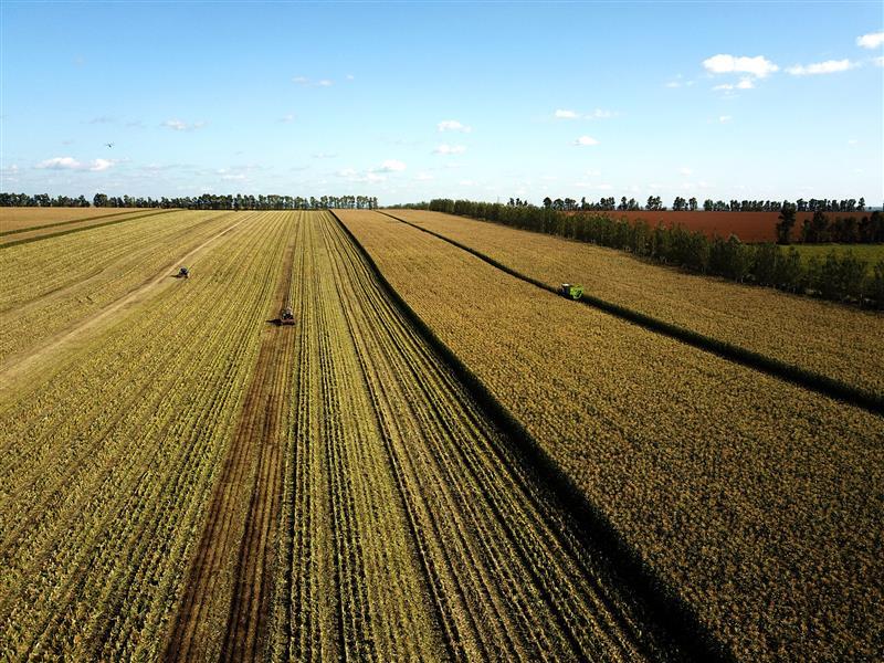 倒排工期 完善设施 北大荒九三分公司避免收获环节粮食损失